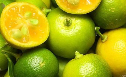 calamansi exotic fruit