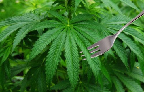 cannabis CBD edibles foods