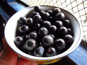acai berries superfood